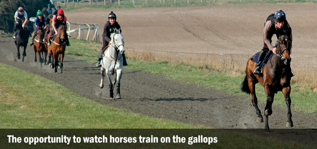 The opportuntiy to watch horses train on the gallops