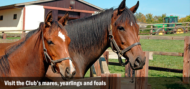 Visit the Club's mares, yearlings and foals