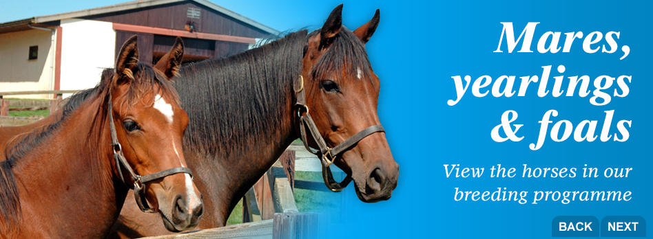 Mares, yearlings and foals - View the horses in our breeding programme