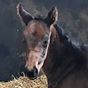 Kind Of Hush's fourth foal arrives safely